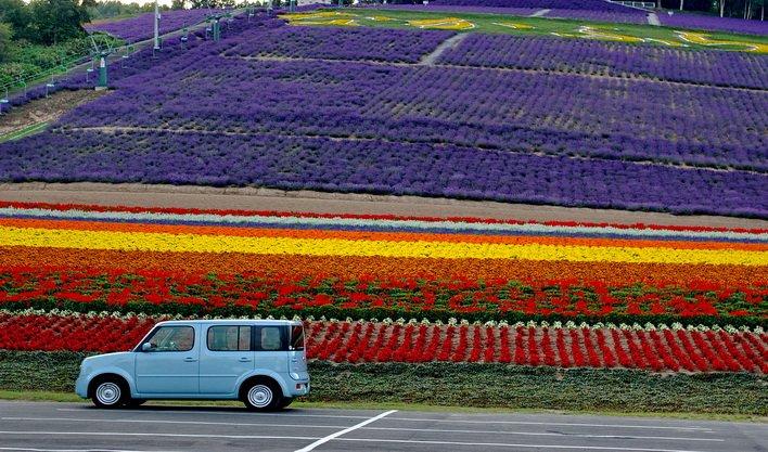 ทัวร์ญี่ปุ่น ชมทุ่งดอกไม้คามิฟุราโน่ โทมิตะฟาร์ม โอตารุ ฮอกไกโด  6วัน 4คืน บิน Thai Airways