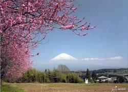 ทัวร์ญี่ปุ่น ทาคายาม่า-มัตสึโมโต้-โตเกียว-โอซาก้า-อาราชิยาม่า 6วัน 3คืน บิน TG