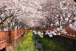 ทัวร์เกาหลี ชมบ้านทรงสุขา ที่แรกของโลก เมืองซูวอน เอเวอร์แลนด์ 5วัน 5คืน บิน Jin Air