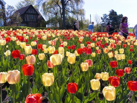 ทัวร์ฝรั่งเศส ลักเซมเบิร์ก เบลเยี่ยม เนเธอร์แลนด์ เทศกาลดอกไม้เคอร์เคนฮอฟ 8วัน6คืน บินAir France