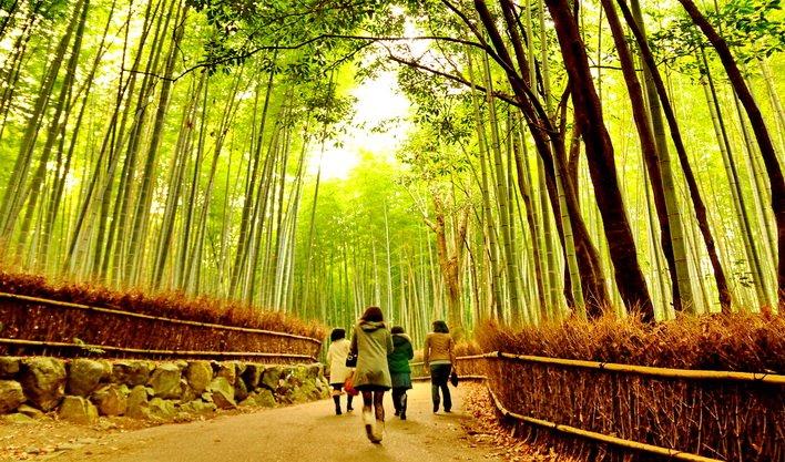 ทัวร์ญี่ปุ่น โอซาก้า อาราชิยาม่า สวนป่าไผ่ สะพานโทเก็ตสึเคียว เกียวโต 4วัน 3คืน บิน Air Asia X