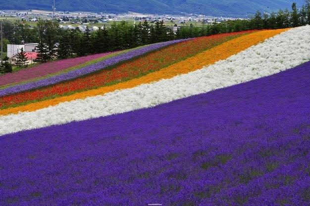 ทัวร์ญี่ปุ่น ฟุราโน่ ฟาร์มโทมิตะ สวนดอกไม้ชิกิไซโนะโอกะ บิเอะ โอตารุ 6วัน 4คืน บิน Thai Airways