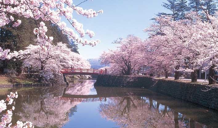 ทัวร์ญี่ปุ่น ชมซากุระบริเวณแม่น้ำซาไก นาโกย่า วัดคิโยมิสึ โอซาก้า 5วัน 3คืน บินAir Asia X