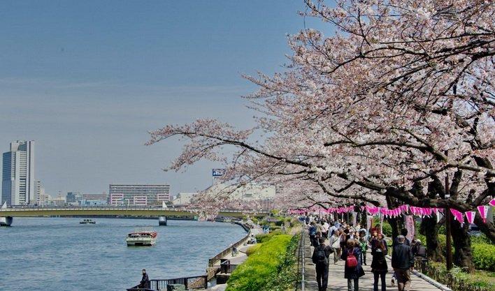 ทัวร์ญี่ปุ่น นครโตเกียว โตเกียวดิสนีย์แลนด์ วัดอาซากุซ่า 5วัน4คืน ALL NIPPON AIRWAYS