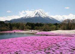 ทัวร์ญี่ปุ่น โตเกียว ภูเขาไฟฟูจิ ทุ่งดอกพิงค์มอส โยโกฮาม่า คามาคุระ 5วัน 3คืน บิน Scoot