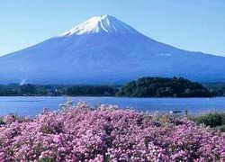 ทัวร์ญี่ปุ่น นารา เกียวโต นาโกย่า ภูเขาไฟฟูจิ ชิซึโอะกะ ฮาราจูกุ โตเกียว 6วัน3คืน บิน Thai Airways