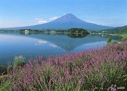 ทัวร์ญี่ปุ่น โตเกียว ชมทุ่งลาเวนเดอร์ ภูเขาไฟฟูจิ พิพิธภัณฑ์แผ่นดินไหว 5วัน3คืน บิน Scoot Airlines