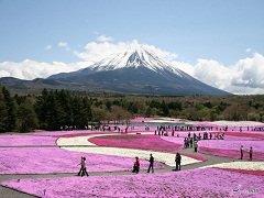 ทัวร์ญี่ปุ่น โตเกียว ชมทุ่งดอกพิงค์มอส ภูเขาไฟฟูจิ ช้อปปิ้งฮาราจูกุ 5วัน 3คืน บิน Air Asia X