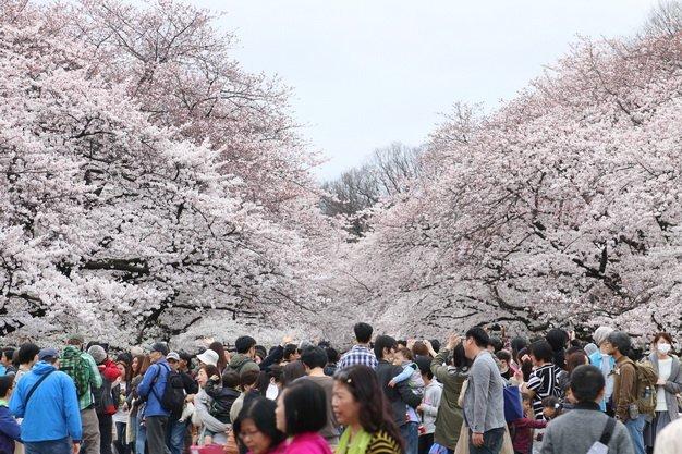 ทัวร์ญี่ปุ่น ชมซากุระ ณ อุเอโนะ ภูเขาไฟฟูจิ วัดอาซากุสะ โตเกียว 5วัน 3คืน บิน Air Asia X