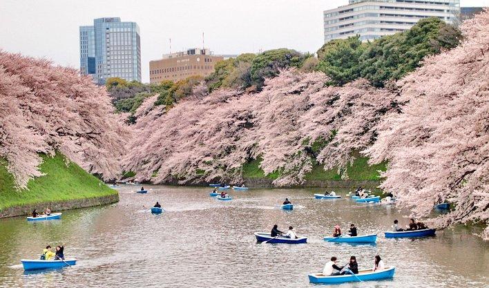 ทัวร์ญี่ปุ่น โอซาก้า นารา เกียวโต โอชิโนะฮัคไค ภูเขาไฟฟูจิ โตเกียว 7วัน 4คืน บิน Thai Airways
