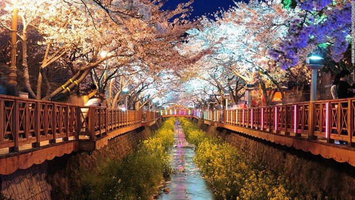 ทัวร์เกาหลีวันสงกรานต์ ชมซากุระถนนยออิโด ไร่สตอเบอร์รี่ โซล 5วัน3คืน บิน Jin Air